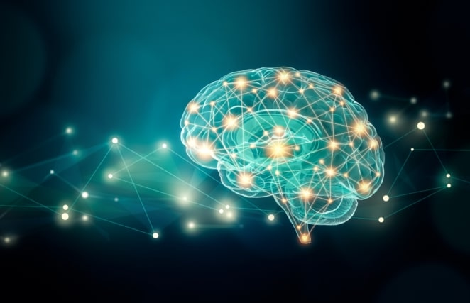 Picture representing the brain